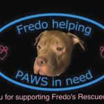 Fredo Helping PAWS in Need Animal Rescue Inc