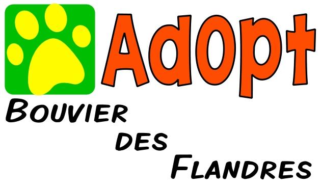 Bouvier des Flandres - AnimalRescueDirectory.NET