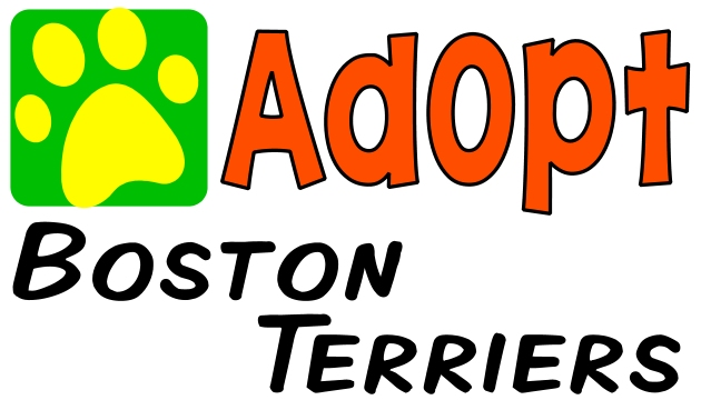 Boston Terriers - AnimalRescueDirectory.NET