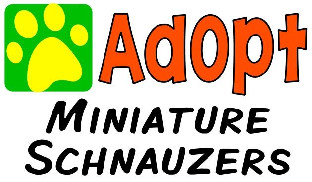 Miniature Schnauzers Animalrescuedirectory Net
