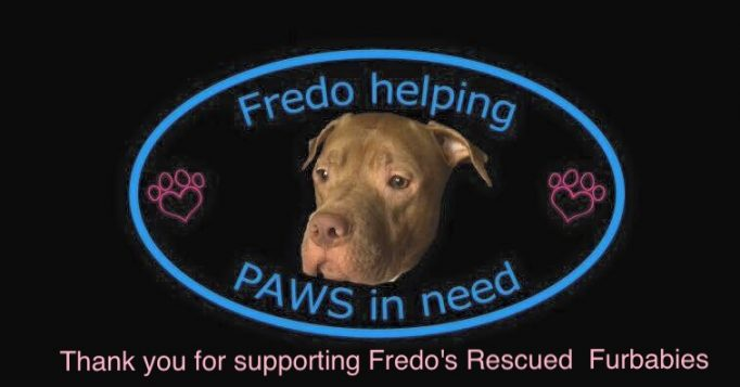 Fredo Helping Paws In Need Animal Rescue Inc Animalrescuedirectory Net