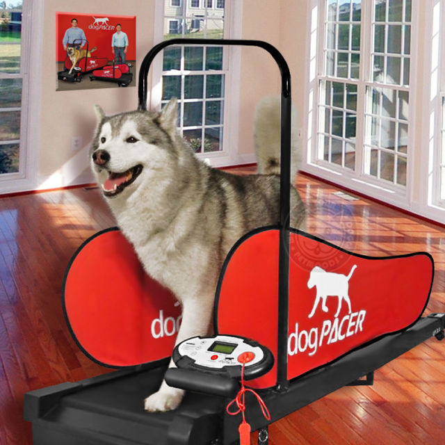 Dogpacer Treadmills For Dogs Animalrescuedirectory Net