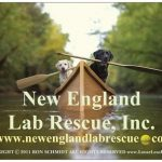 New England Lab Rescue, Inc